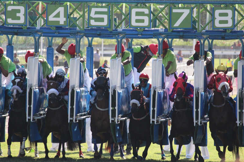 départ de course de chevaux