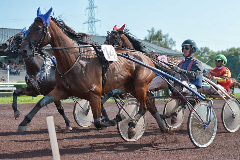course de chevaux 3 attelés