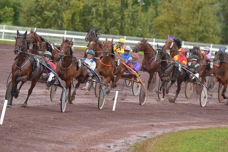 course de chevaux 11 attelés